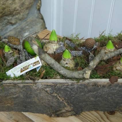 Compo jacinthes ext