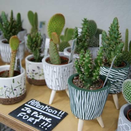succulente ou cactus