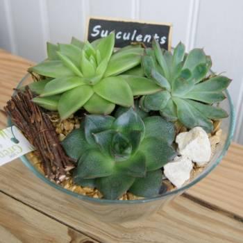 fdm_20_succulentes_1.jpg