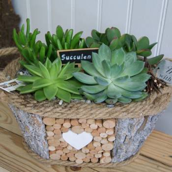 fdm_20_succulentes_2.jpg