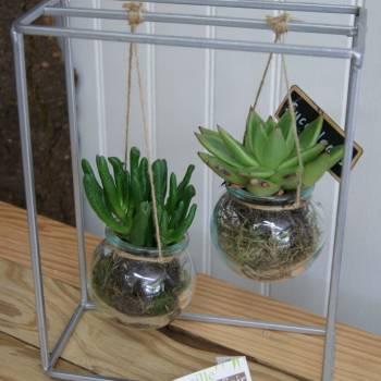 fdm_20_succulentes_3.jpg