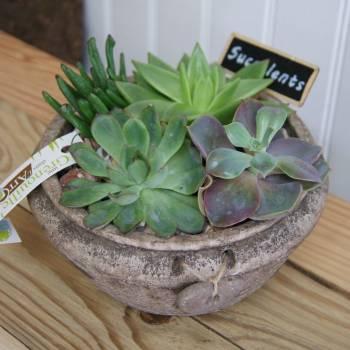 fdm_20_succulentes_4.jpg