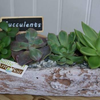 fdm_20_succulentes_6.jpg